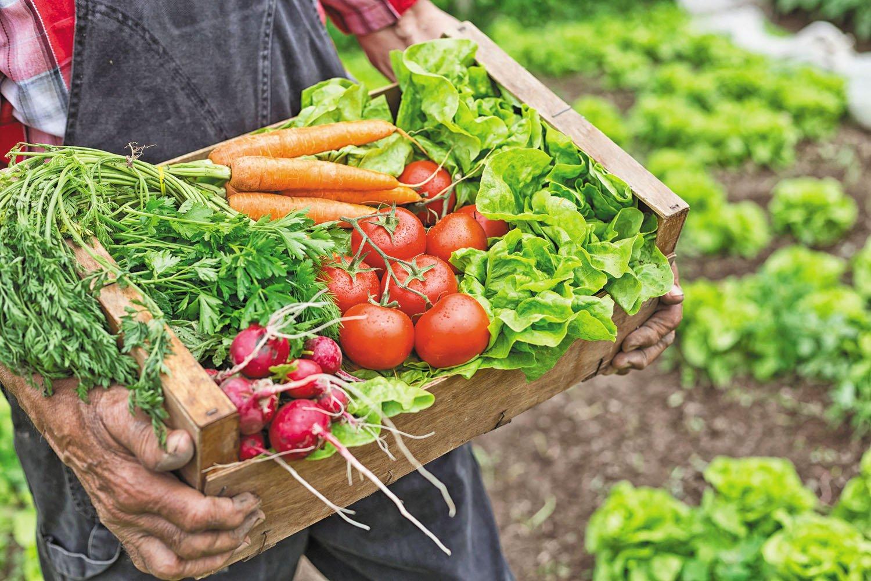 dieta keto vegetales
